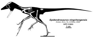 Silhouette mit den gefundenen Knochen von Epidendrosaurus