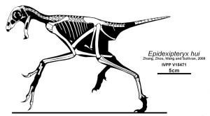 Silhouette von Epidexipteryx mit den gefundenen Knochen. By Jaime A Headden, CC 3.0