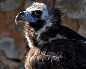 Das Proyecto Monachus bittet Norwegen um die Rückgabe von Brinzola