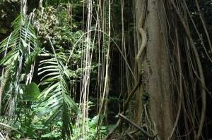 Dschungelszene mit Baumstamm, Lianen und Palmfarn
