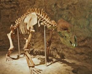 Montiertes Skelett eines Höhlenbären