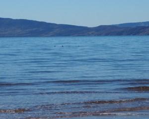 Eine Otterfamilie in einem Meeresarm