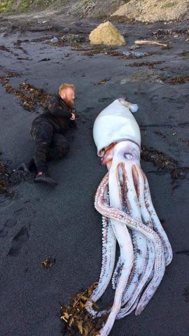 Ein Mann liegt neben einem toten Riesenkalmar an einem schwarzen Strand