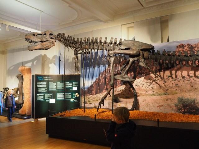Tinker, der junge Tyrannosaurus