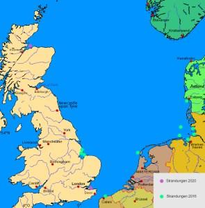 Pottwalstrandungen Nordsee 2016 und 2020