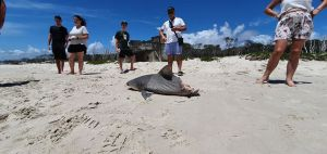 Halber Hai am Strand
