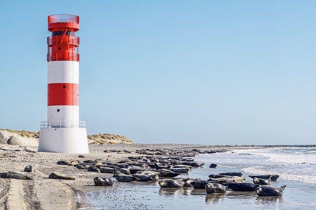 Kegelrobben auf Düne bei Helgoland
