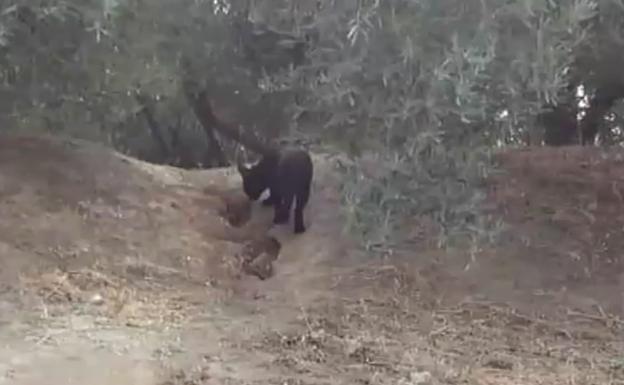 Schwarzer Panther?
