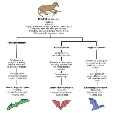 Abstammung der Fledertiere