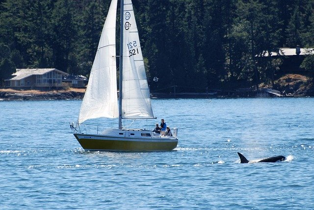 Orcas und Segelboot