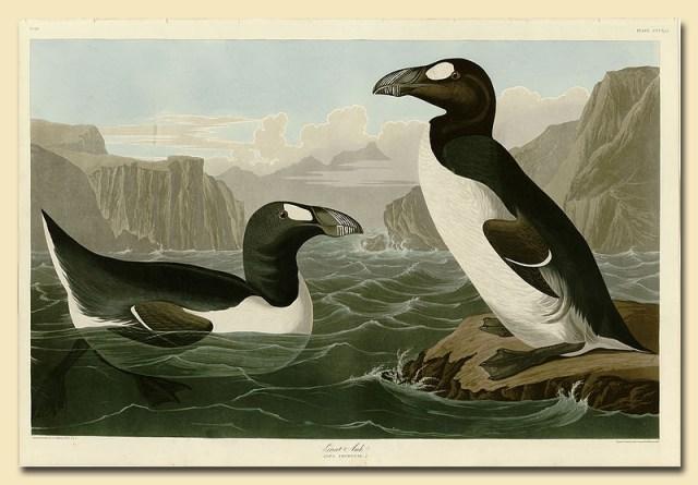Riesenalk in Birds of America