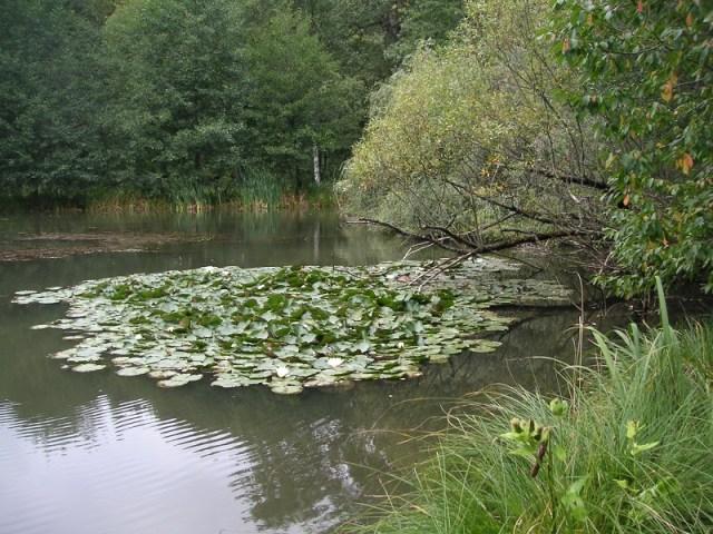 Schönbruch Teich