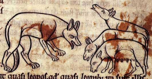 Wolf bedroht Schafe