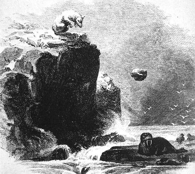 Eisbär tötet Walross mit Felsen