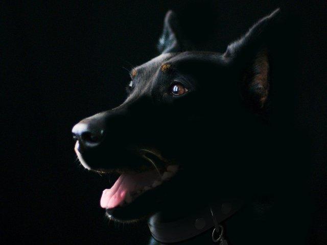 Schwarzer Hund oder doch ein Phantomhund