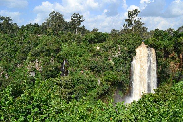 Ist der Kongo-Regenwald Heimat eines kleinen Menschenaffen, des Kakundakari