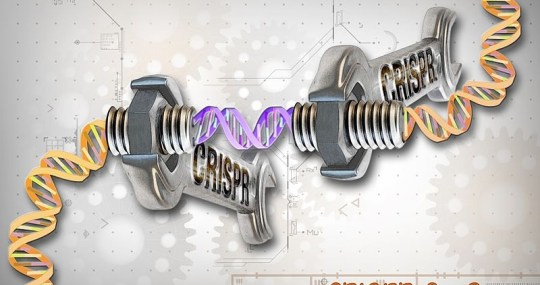 Editas's CRISPR Study on Human Follows Norm