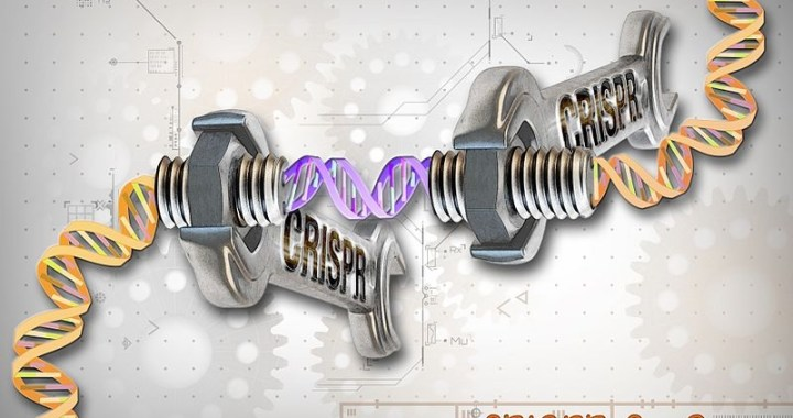 Editas's CRISPR Study on Human Follows Norm