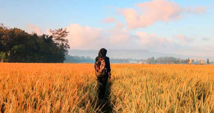 Organic Farming- A Revolutionary Approach for Improving Crop Quality and Public Health