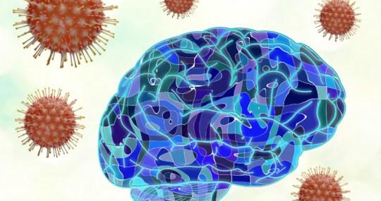 কোভিড-১৯ মস্তিষ্ক ও স্নায়ুতন্ত্রের ক্ষতি করে: গবেষণার নতুন তথ্য