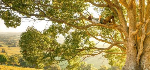 Ein Mann auf einem Baum beim Denken. (Foto: Rob Mulally, Unsplash.com)