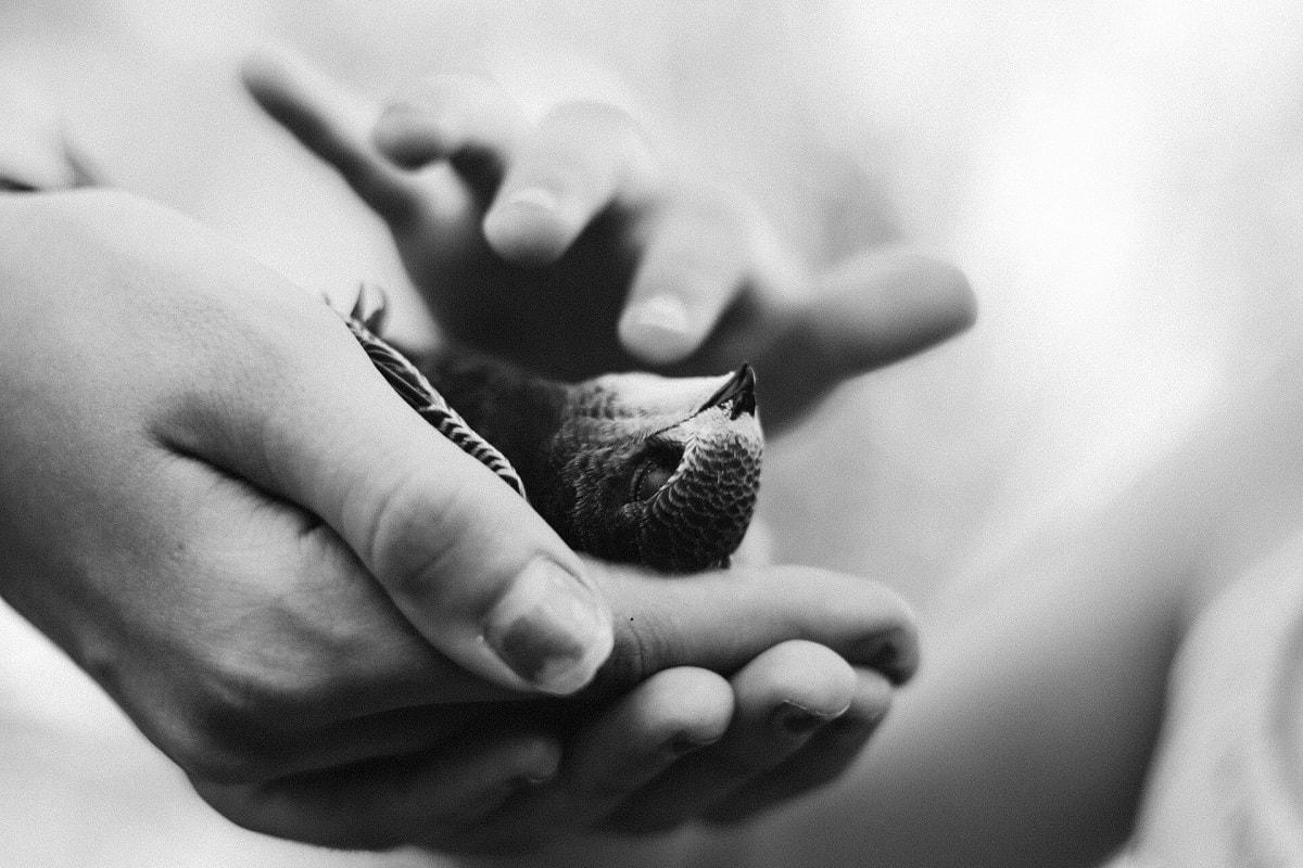 Ein toter Vogel in den Händen von Kindern. (Foto: Nine Köpfer, Unsplash.com)
