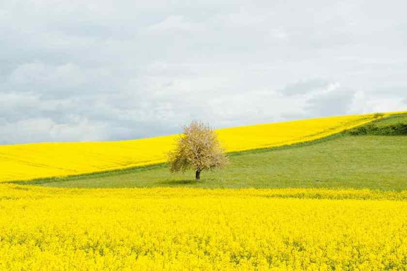 Frankreichs Gelbwesten und der Schreiber des Volkes