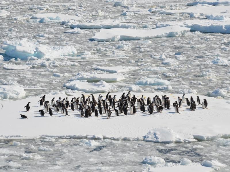 Klimawandel: Das ewige Eis schwindet