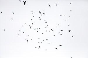 Komplexität eines Vogelschwarms in Brasilien. (Foto: Renato Ribeiro Silva, Unsplash.com)