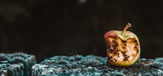 Wie ein Sturm fegen die Ameisen über einen alten verrotteten Apfel hinweg. (Foto: Maria Teneva, Unsplash.com)