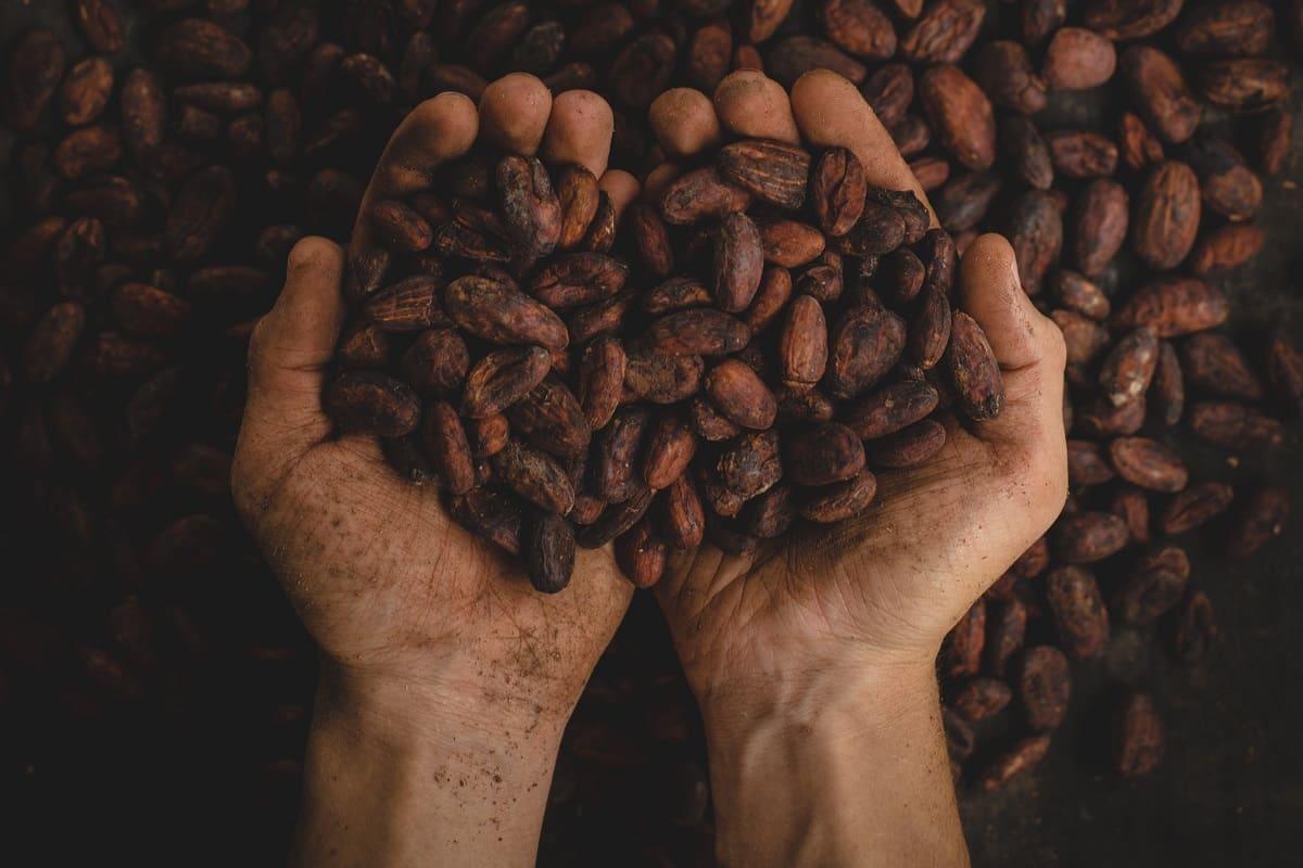 Soziale Ungleichheit ist Ursache von Kinderarbeit, auch in der Kakaoproduktion. Kakaobohnen aus Kolumbien. (Foto: Pablo Merchan Montes, Unsplash.com)