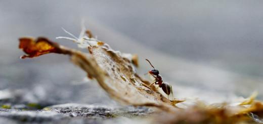 Apologetik ist einer Ameise fremd. Sie handelt. (Symbolfoto: Christian Lischka, Unsplash.com)
