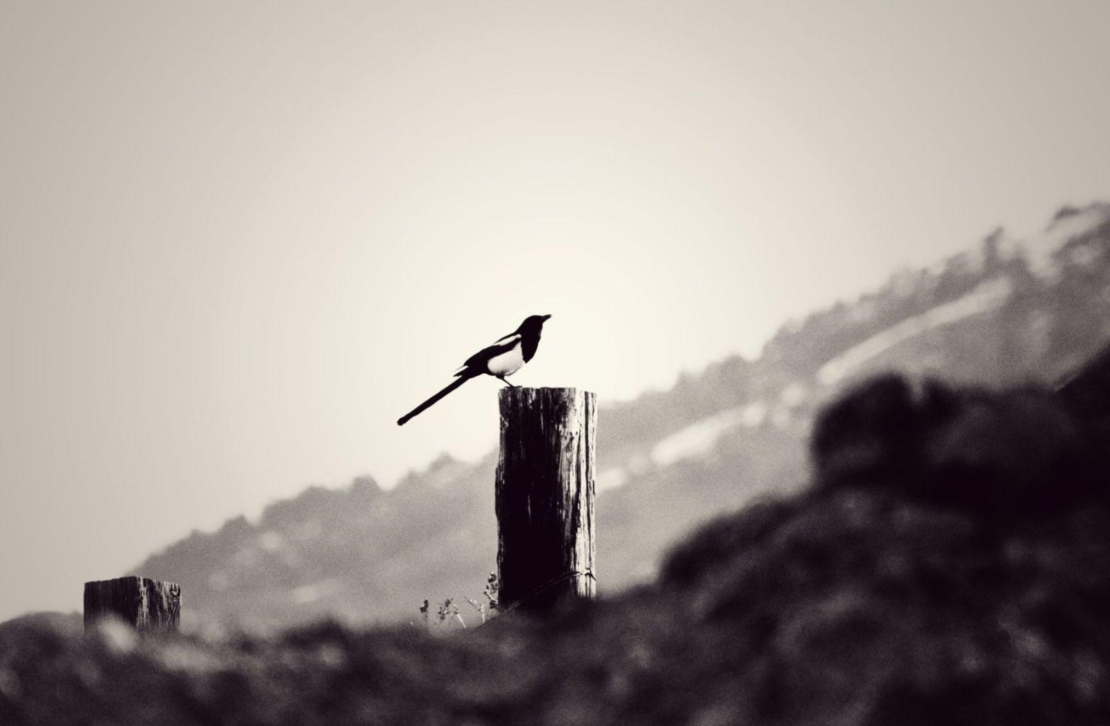 Der letzte Mensch hat keine Flügel wie eine Elster. (Foto Joshua Hoehne, Unsplash.com)