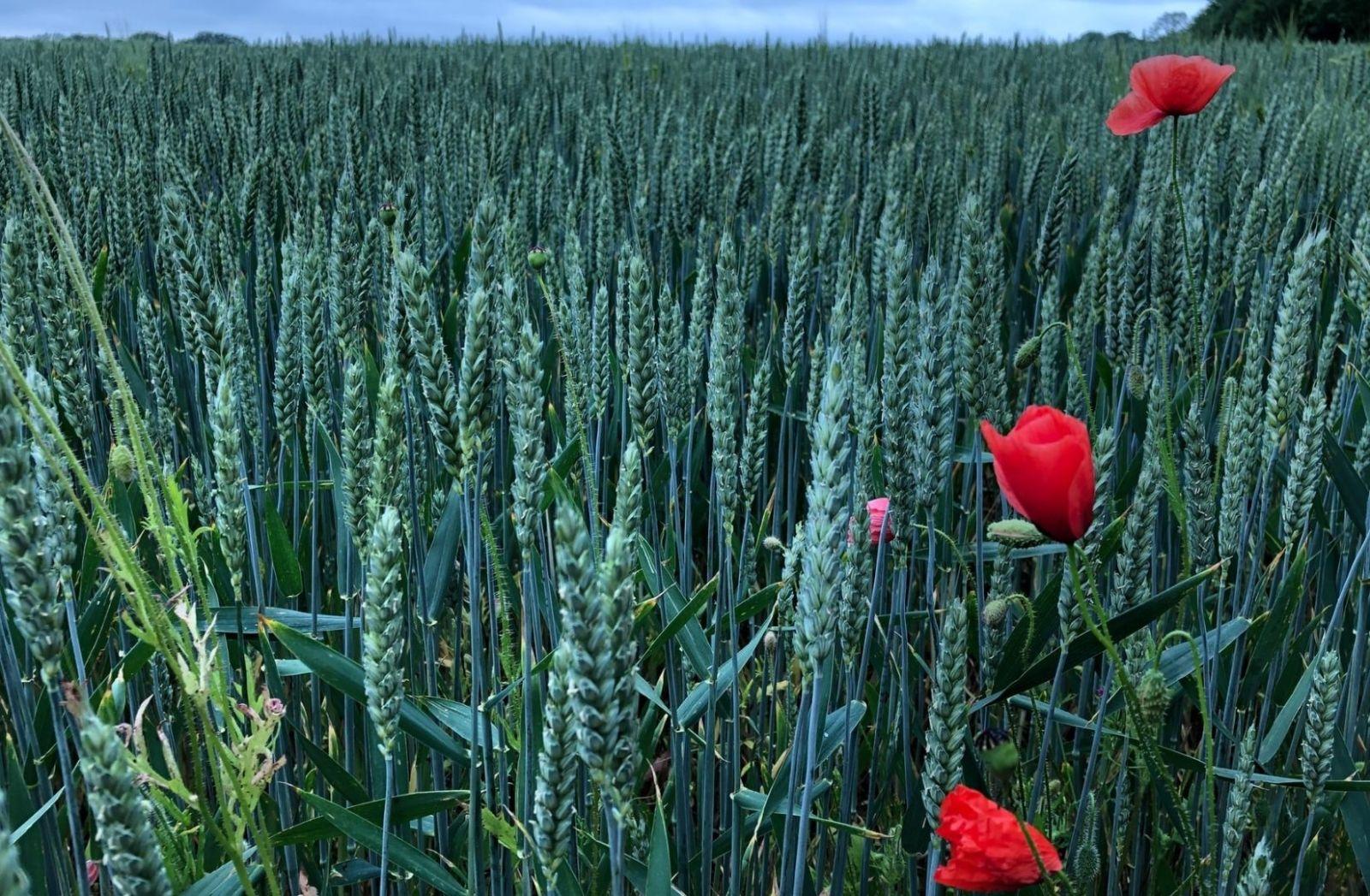 Revanchismus findet sich nicht auf bestellten Feldern. (Foto: Abi Nash, Unsplash.com)