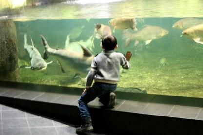 Wochenendausflug ins Aquarium