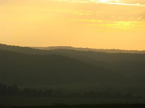 Früher Morgen im Eifelwald
