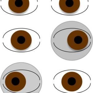 Orthoptik / Visualtraining