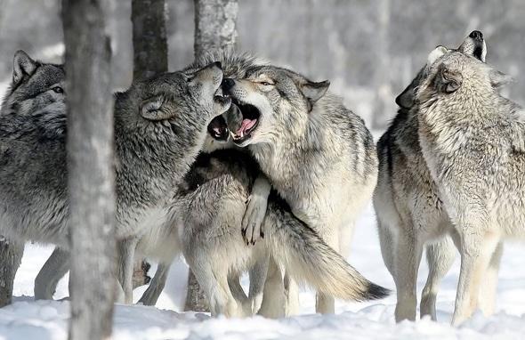 Courtesy of National Geographic photographer Gaetan Bourque