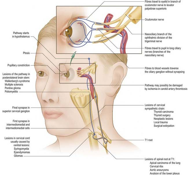 Autonomic Nervous System Neupsy Key