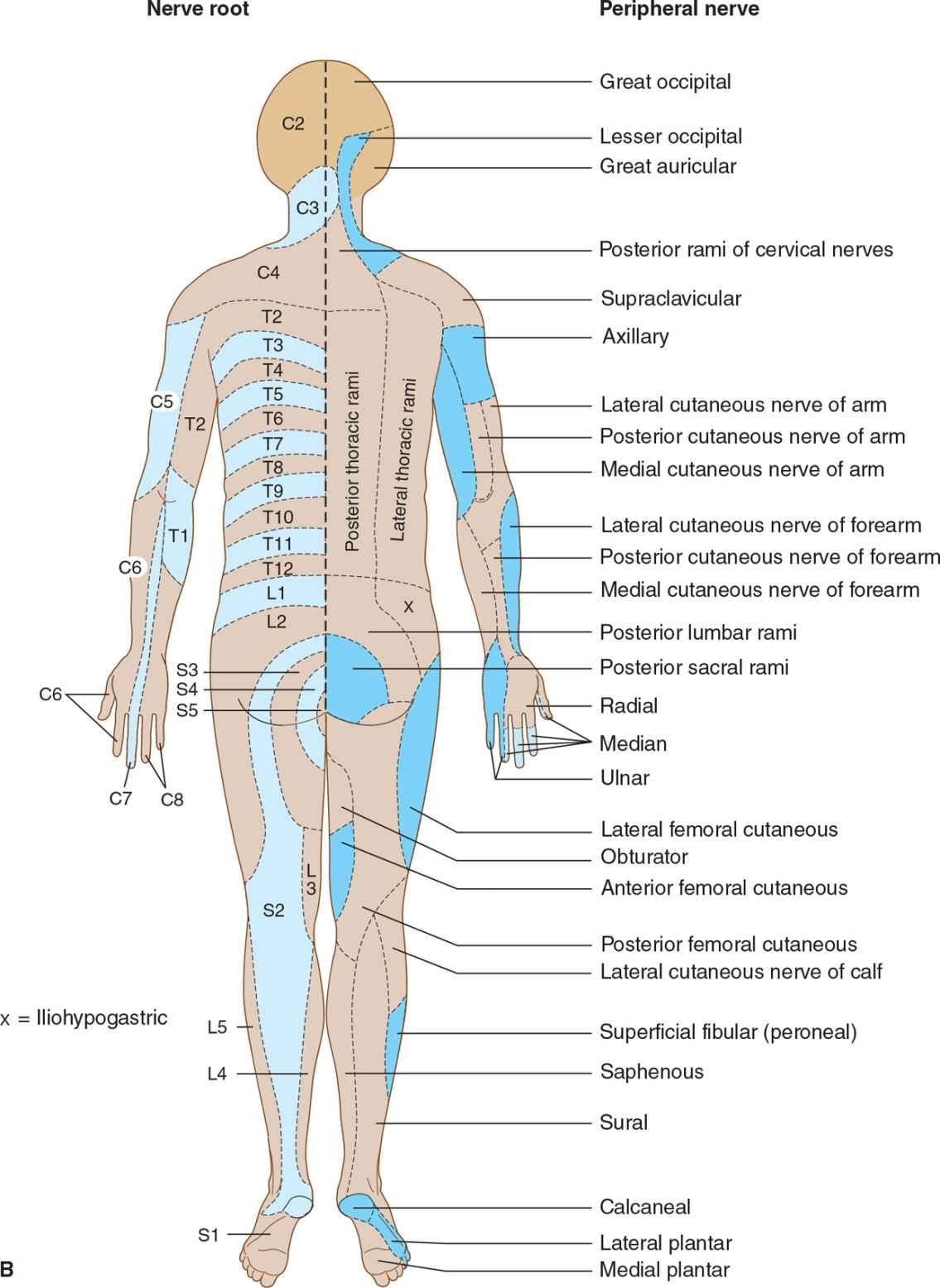 l4 nerve pain diagram wiring of dol motor starter sensory disorders neupsy key