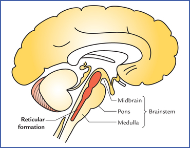 reticular formation diagram 12 volt marine wiring lobe diagrams brain partinest free for you stem automotive u2022 rh vbpodcasts com