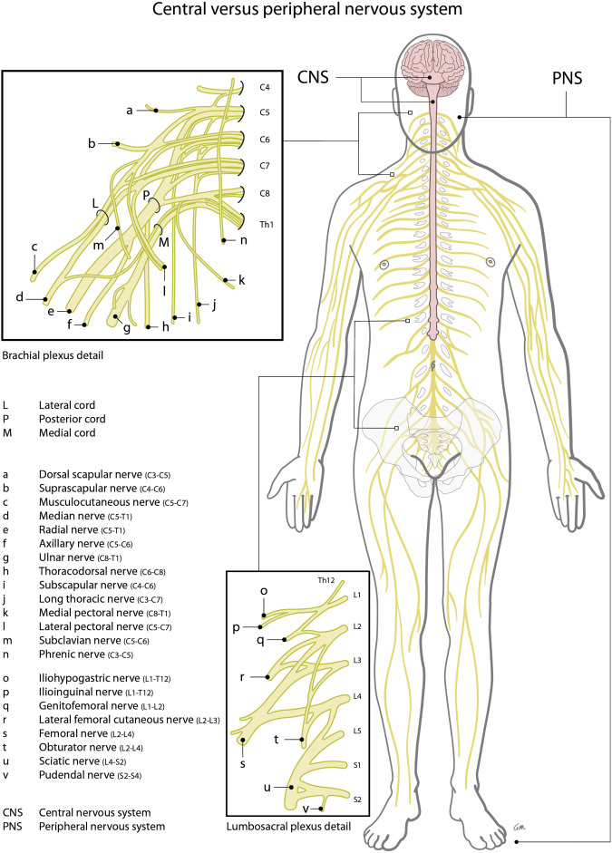 Spinal Cord Stimulation for Peripheral Neuropathic Pain
