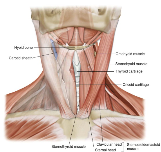 Surgical Anatomy And Biomechanics In The Mid And Lower Cervical