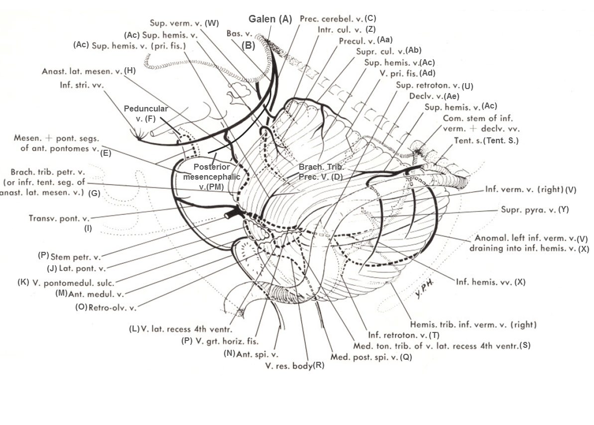 Lateral Mesencephalic Vein
