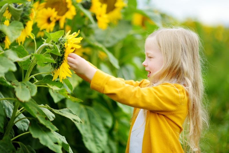 Child playing with sunflowers and not attending ABA or PBIS