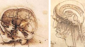 Un cerebro renacentista