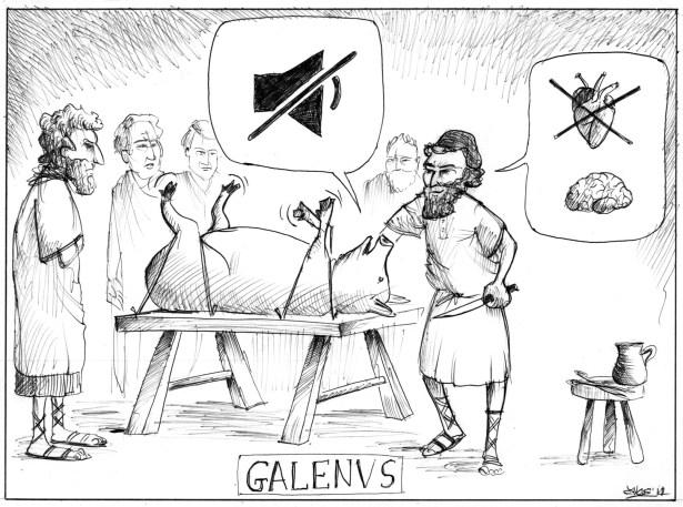 cerebro pensante: Galeno observó que la interrupción del nervio laríngeo recurrente bloquea la vocalización