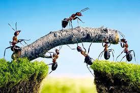 Cómo impedir el trabajo en equipo de manera infalible