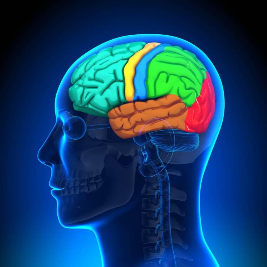 neurolíder