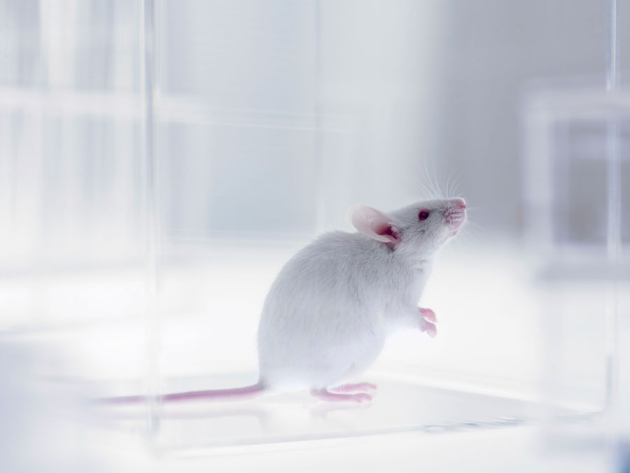 Bright light accelerates ageing in mice